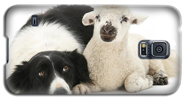 No Sheep Jokes, Please Galaxy S5 Case