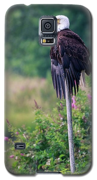 No Worries Galaxy S5 Case