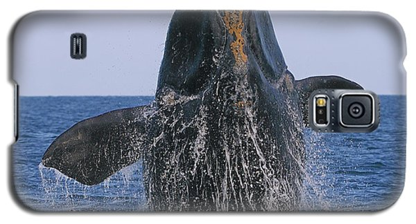North Atlantic Right Whale Breaching Galaxy S5 Case