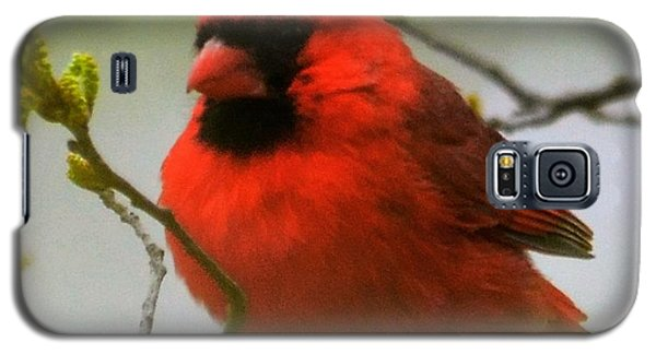 North Carolina Cardinal Galaxy S5 Case