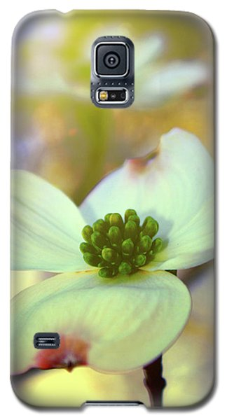 Galaxy S5 Case featuring the painting North Carolina Dogwood State Flower by Gray  Artus