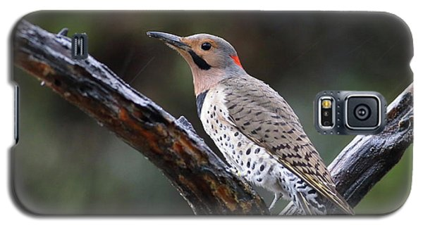 Northern Flicker In Rain Galaxy S5 Case