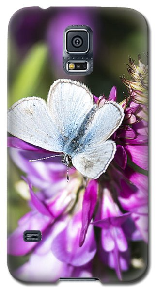 Northern Blue Butterfly Galaxy S5 Case