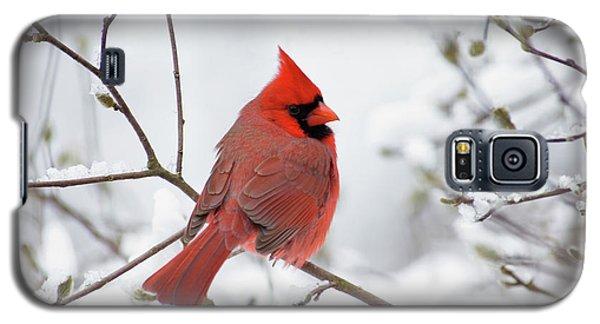 Northern Cardinal - D001540 Galaxy S5 Case