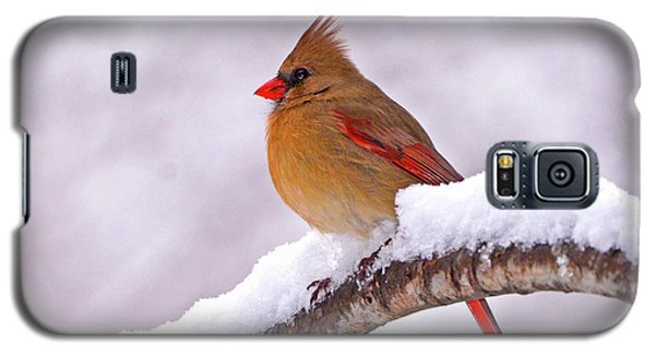 Northern Cardinal In Winter Galaxy S5 Case