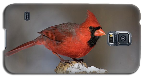 Galaxy S5 Case featuring the photograph Northern Cardinal In Winter by Mircea Costina Photography