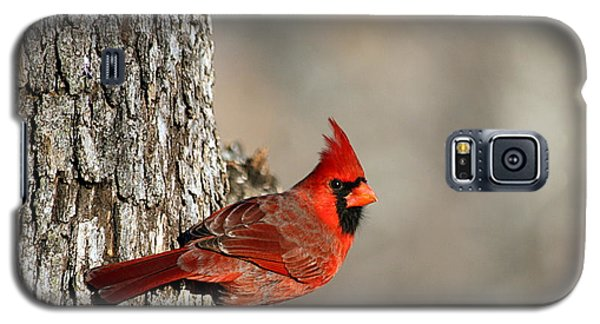 Northern Cardinal On Tree Galaxy S5 Case