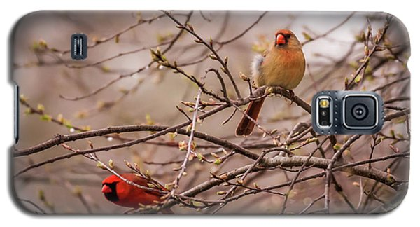 Galaxy S5 Case featuring the photograph Northern Cardinal Pair In Spring by Terry DeLuco