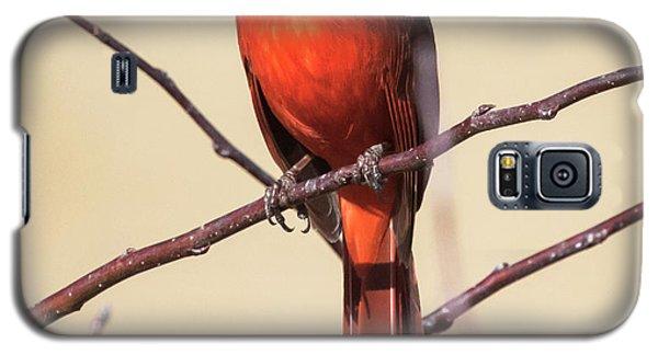Northern Cardinal Profile Galaxy S5 Case