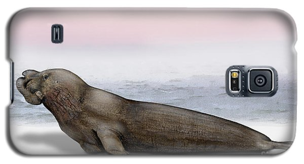 Northern Elephant Seal Mirounga Angustirostris Male - Marine Mammal - Seeelefant Galaxy S5 Case