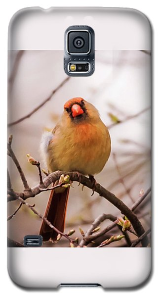 Galaxy S5 Case featuring the photograph Northern Female Cardinal Pose by Terry DeLuco