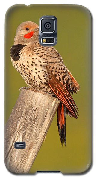 Northern Flicker Looking Back Galaxy S5 Case by Max Allen
