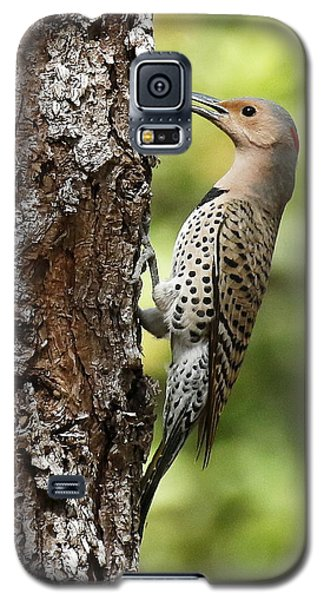 Northern Flicker On The Hunt Galaxy S5 Case