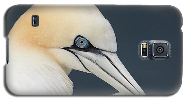 Northern Gannet At Troup Head - Scotland Galaxy S5 Case