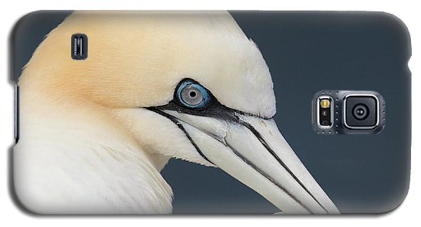 Northern Gannet At Troup Head - Scotland Galaxy S5 Case