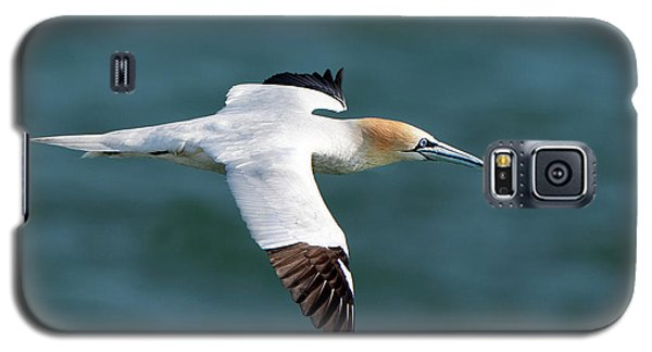 Northern Gannet Galaxy S5 Case