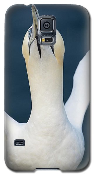Northern Gannet Stretching Its Wings Galaxy S5 Case