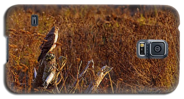 Galaxy S5 Case featuring the photograph Northern Harrier At Sunset by Sharon Talson