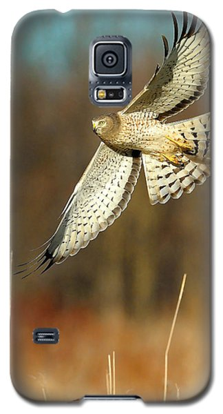 Northern Harrier Banking Galaxy S5 Case