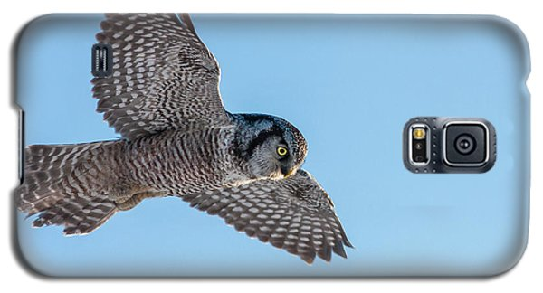 Galaxy S5 Case featuring the photograph Northern Hawk Owl Hunting by Mircea Costina Photography