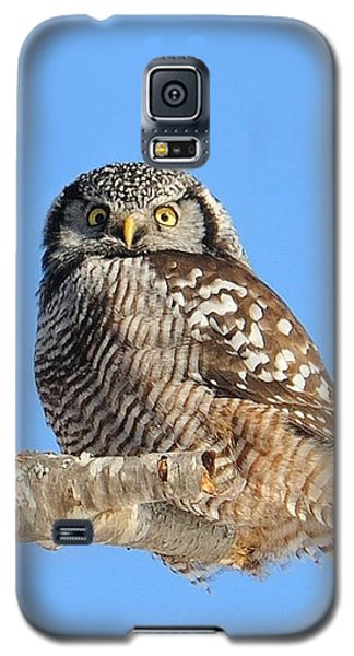 Northern Hawk-owl On Limb Galaxy S5 Case