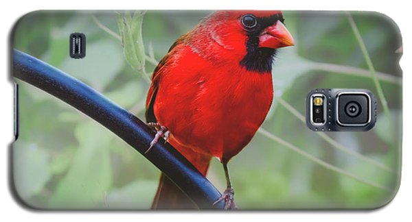 Northern Male Red Cardinal Bird Galaxy S5 Case