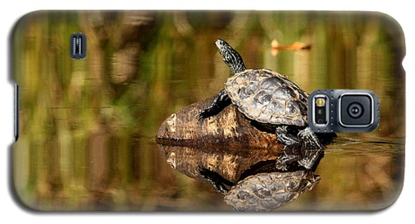 Galaxy S5 Case featuring the photograph Northern Map Turtle by Debbie Oppermann
