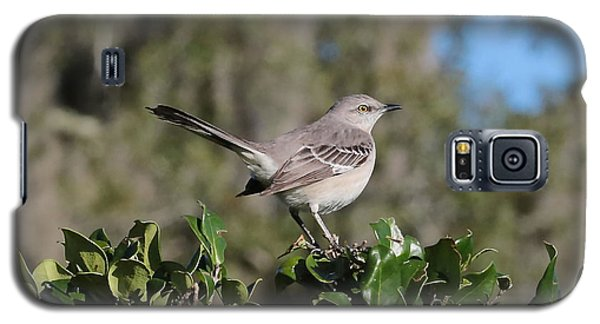 Northern Mockingbird Galaxy S5 Case by Carol Groenen