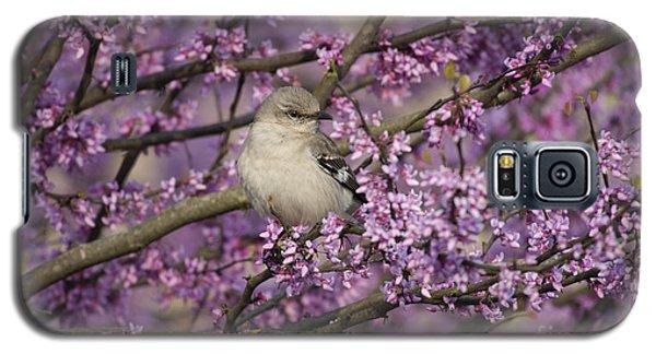 Northern Mockingbird In Blooming Redbud Tree Galaxy S5 Case