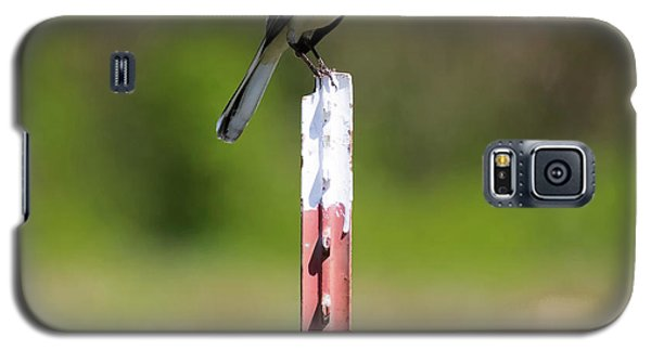 Galaxy S5 Case featuring the photograph Northern Mockingbird Posing  by Ricky L Jones