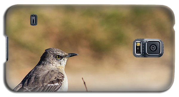Northern Mockingbird Sitting On Top Of A Hedge Galaxy S5 Case