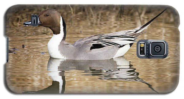 Northern Pintail Drake Galaxy S5 Case