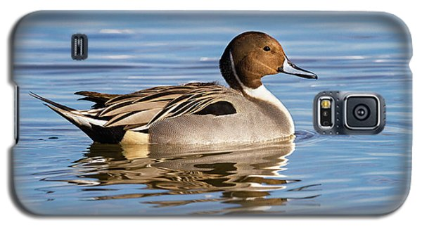 Northern Pintail Duck Galaxy S5 Case