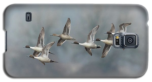Galaxy S5 Case featuring the photograph Northern Pintails In Flight by Angie Vogel