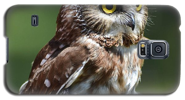 Northern Saw Whet Owl Galaxy S5 Case