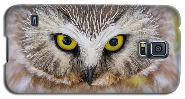 Galaxy S5 Case featuring the photograph Northern Saw-whet Owl Portrait by Mircea Costina Photography
