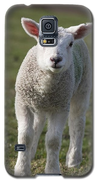 Sheep Galaxy S5 Case - Northumberland, England A White Lamb by John Short