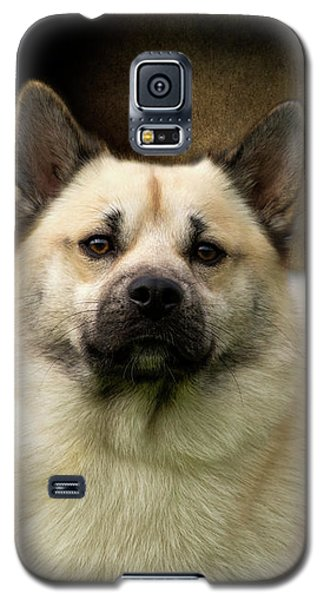 Norwegian Buhund Galaxy S5 Case