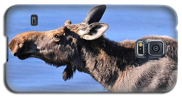 Nose First - Moose Galaxy S5 Case