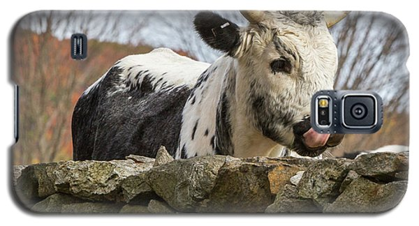 Galaxy S5 Case featuring the photograph Nosey by Bill Wakeley