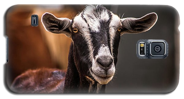 Nubian Goat In Barnyard Galaxy S5 Case