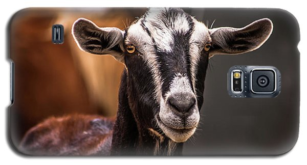 Nubian Goat In Barnyard Galaxy S5 Case