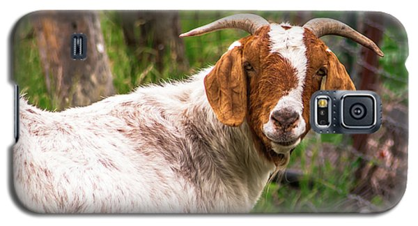 Nubian Goat Profile Sonoma County Galaxy S5 Case