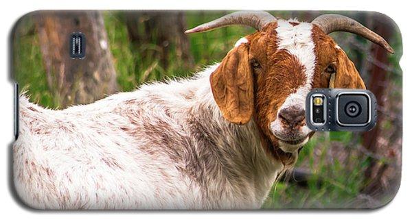 Nubian Goat Profile Sonoma County Galaxy S5 Case