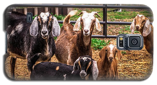 Nubian Goats Family Portrait Galaxy S5 Case