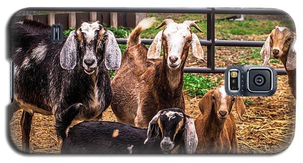 Nubian Goats Family Portrait Galaxy S5 Case