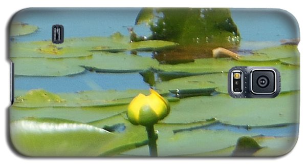 Nuphar Lutea Yellow Pond Galaxy S5 Case