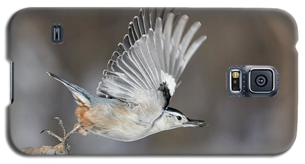 Galaxy S5 Case featuring the photograph Nuthatch In Action by Mircea Costina Photography