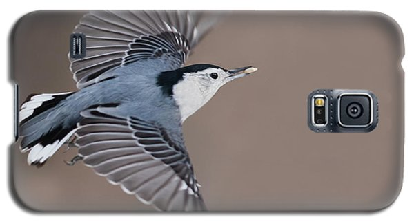 Galaxy S5 Case featuring the photograph Nuthatch In Flight by Mircea Costina Photography