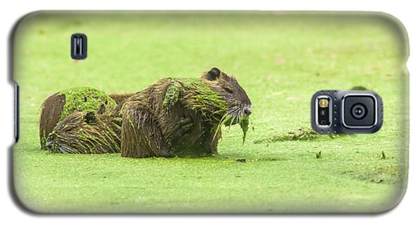 Galaxy S5 Case featuring the photograph Nutria In A Pesto Sauce by Robert Frederick